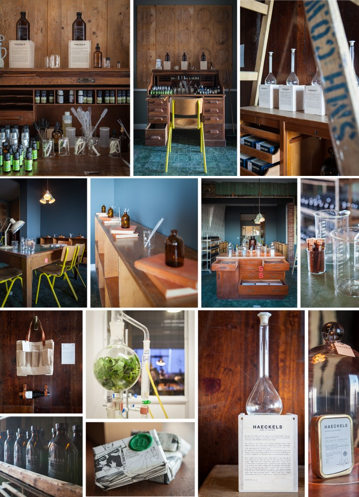 images only haeckels2